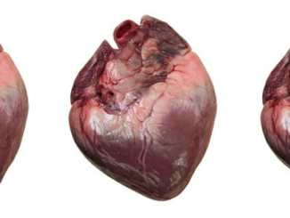 af77920250fedd39d9dd744a6c7257a8 - S novým srdcem můžete dostat paměť dárce (1)