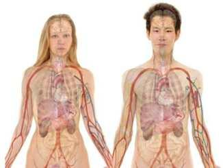 Lidská játra - anatomický popis a funkce orgánu. Orgán žlučník ve spojení s játrou.