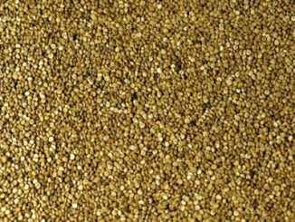6d9bbede62245002f4ea243e55b3094d - Quinoa je pro bezlepkáře nejvýživnější