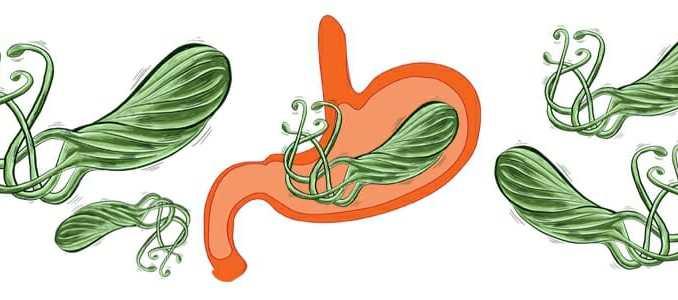 Helicobacter pylori vyvolává žaludeční vředy.
