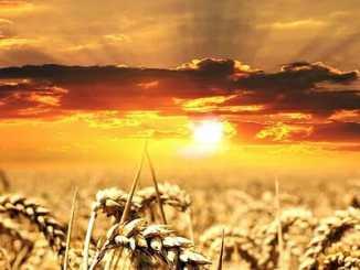 5e38eead98db012ab87cb3d0dd75dc9a - Má naše slunce své vlastní vědomí?