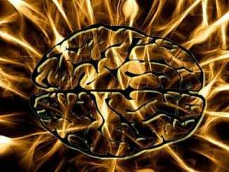 d1db575d75eb22e3ec99059dfcfcd8c3 - Co se vlastně skrývá v lidském mozku?