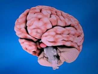 0b76a34d1fba97adfdbf8c5854123563 - Destruktivní vliv mozkové kůry na lidskou bytost