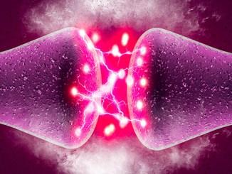 Neurony v mozku mohou růst až do devadesáti.