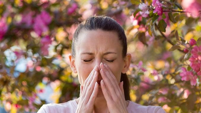 Přírodní antihistaminika mírní projevy sezonní alergie.