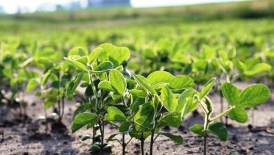 Photo of 420.000 hectáreas serán deforestadas para producir etanol y biodiésel