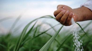 Photo of YPFB: la demanda de urea en el mercado interno logró crecimiento de 72%