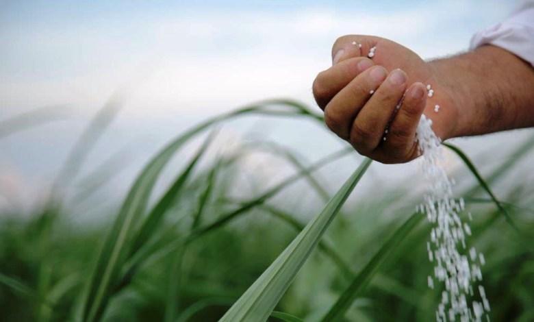 Photo of No solo el gas interesa a   nuestros mercados naturales