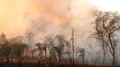 Photo of Académicos piden declarar zona de desastre y gestionar ayuda para la Chiquitania