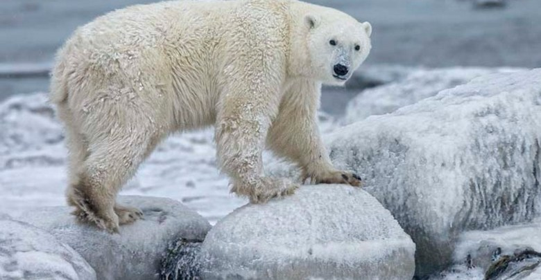 Photo of Trump aprueba concesiones petroleras en refugio de vida salvaje en Alaska