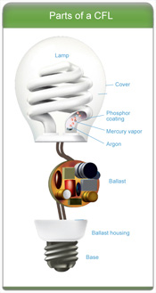 How CFL bulbs work