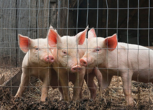 3-little-pigs-combustion-customization-complexity