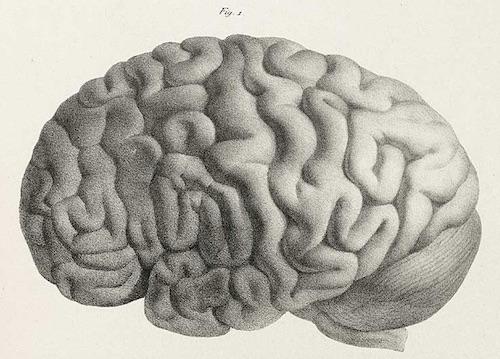 Human-brain-Joseph-Vimont-500.jpg