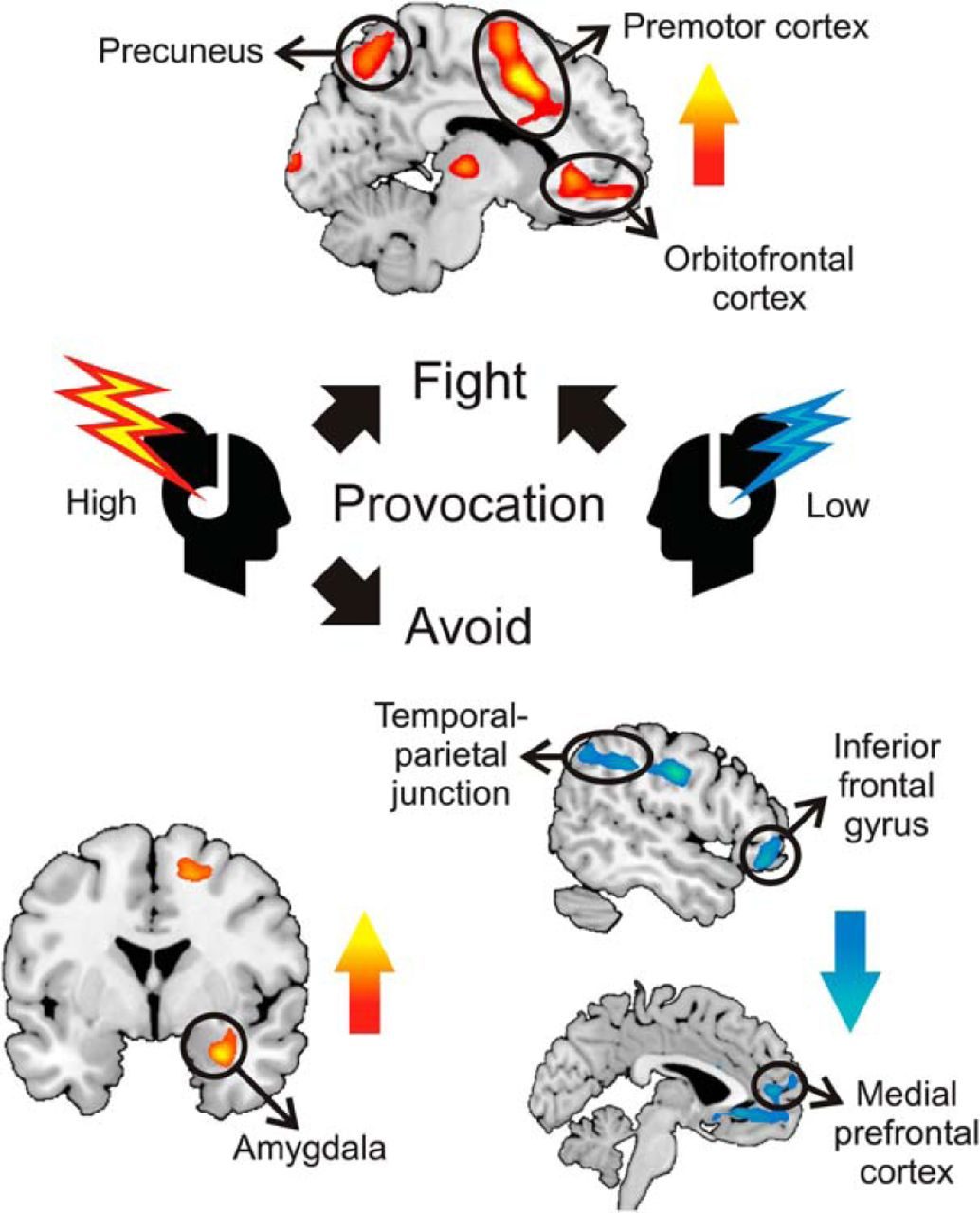 Avoidant Responses To Interpersonal Provocation Are
