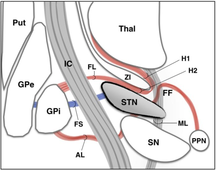 subthalamic nucleus deep brain stimulation: basic concepts and