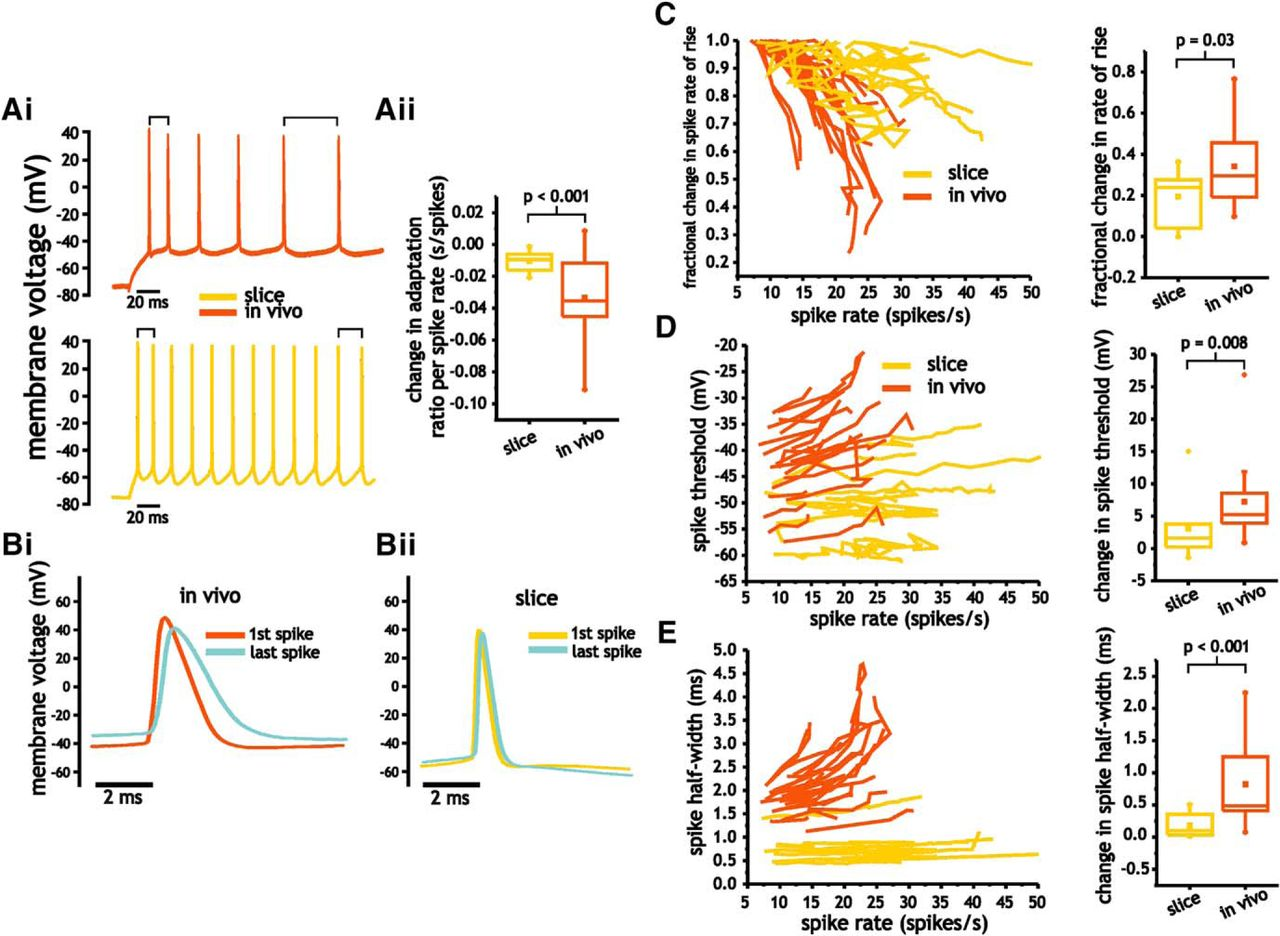 Differences In The Electrophysiological Properties Of Mouse Somatosensory Layer 2 3 Neurons In