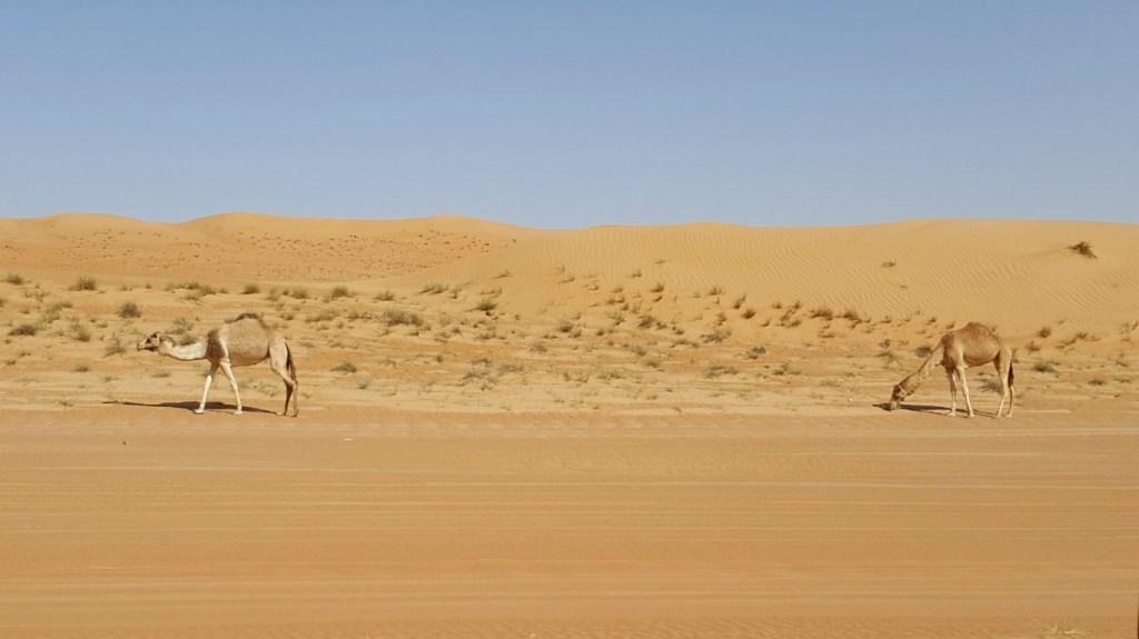1000 Nights Camp i Wahiba Sands i Oman