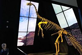 Geocenter_Levende_dinosaur