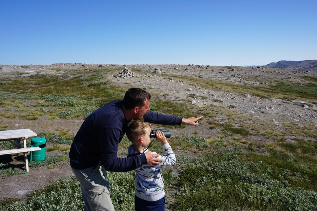 Groenland_Moskus_2