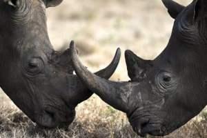 zoo-arcachon-avis-reduction-bassin-rhinoceros-noir