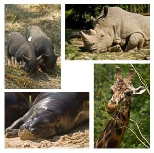 animaux-au-zoo-de-bratislava