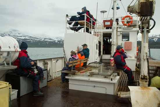 baleine-en-islande-découverte-avec-enfant