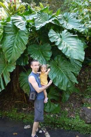 Guadeloupe-les-antilles-bébé-famille