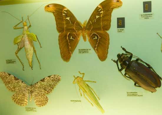 insecte-musée-de-grenoble