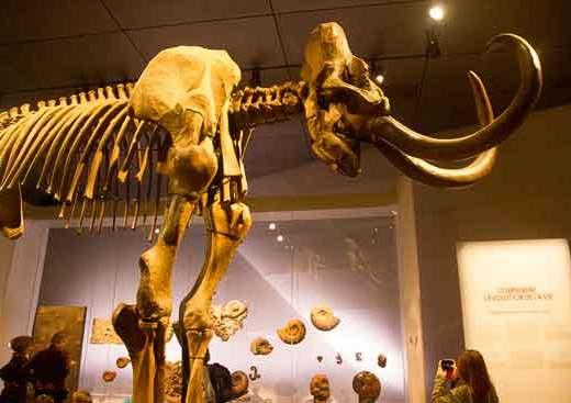 musée-des-confluences--lyon-mammouth
