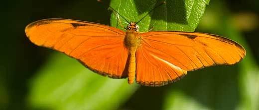 papillon-hortus-botanica-amsterdam