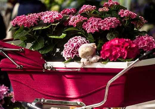 jardin-keukenhof-hollande-fleurs