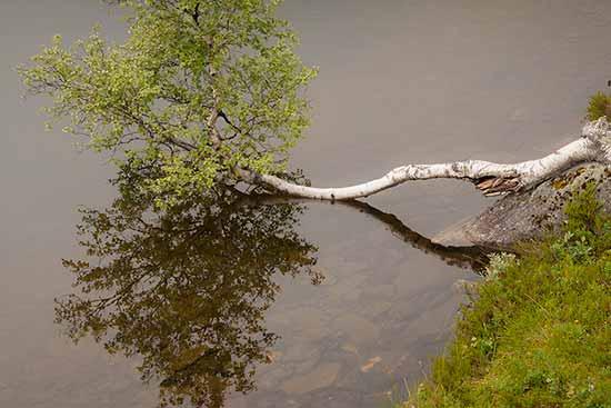 lac-et-bouleau-norvège