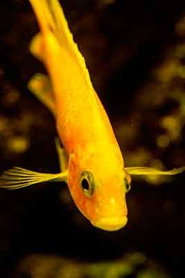 poisson-jardin-botanique-edimbourg