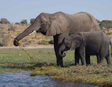 éléphant-avec-son-petit-namibie