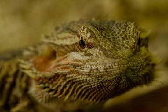 reptile-zoo-saint-martin-la-plaine