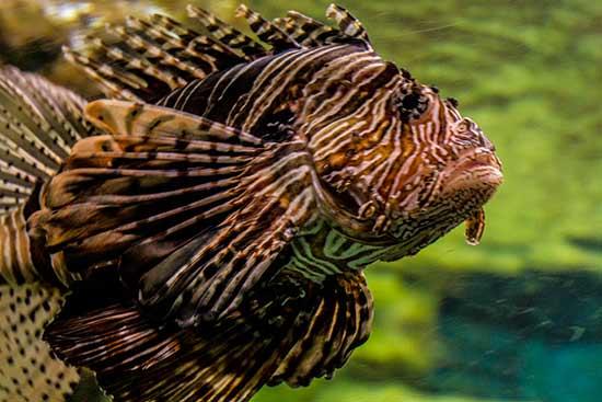 Aquarium-barcelone-poisson-zébré