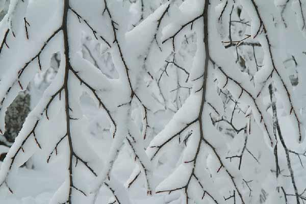 branche-recouverte-de-neige-vercors