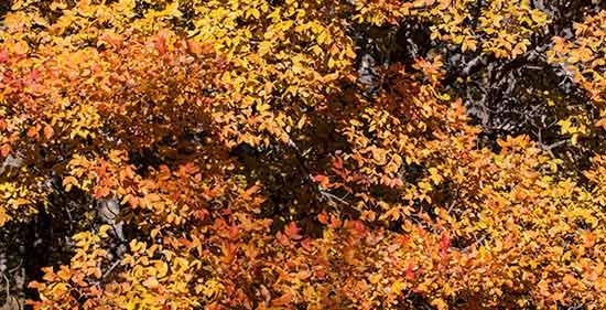 automne dans le massif du Lubéron