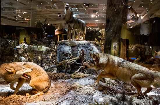 stockholm-en-famille-museum-histoire-naturelle