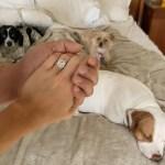 Joanna Krupa's Cushion Cut Diamond Ring