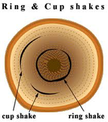 Ring shake timber defects