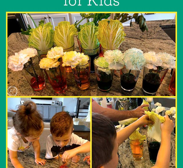 Color Changing Plants  | STEAM Experiments for Kids