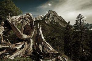 Es wird immer kahler im Wald der PLM-Zeitschriften (Bild: Joachim Wendenburg).