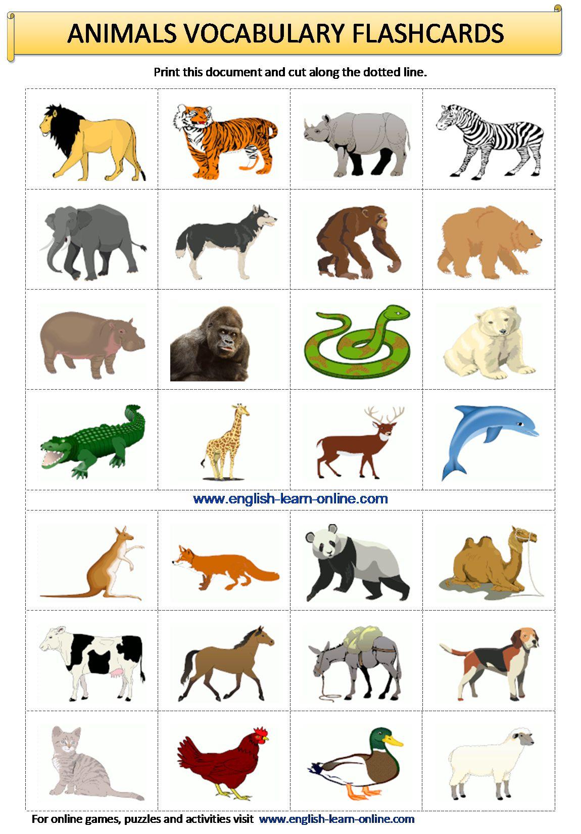 Animals Vocabulary In English