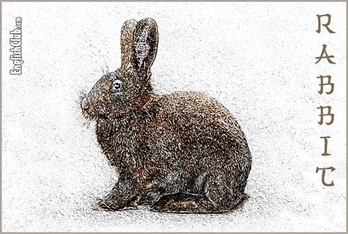 Rabbit - Chinese Zodiac Animal