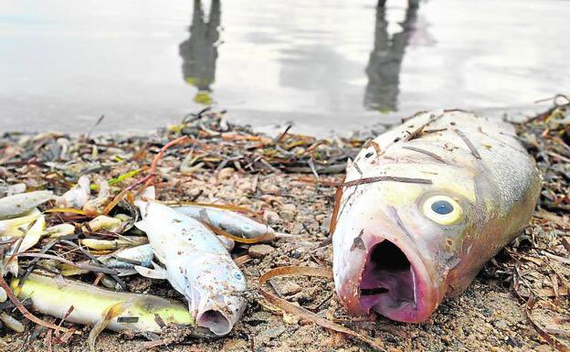 Investigation launched into deaths of thousands of fish