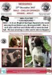 Max – Missing Springer Spaniel