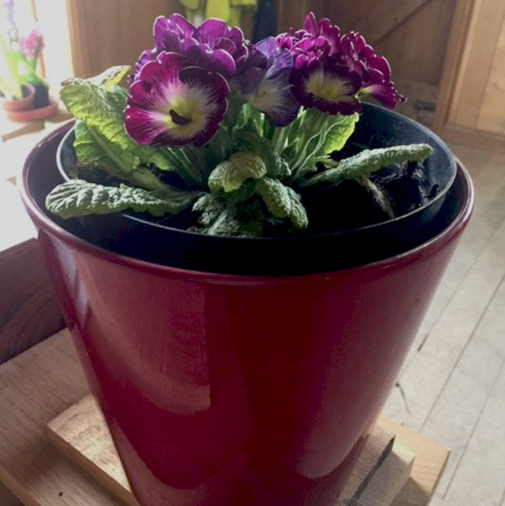 Graham's keeping this little red pot full of super flowers from his garden at home