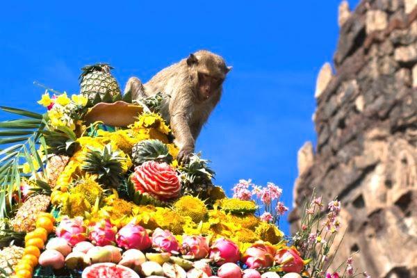 Lopburi Feast For Monkeys