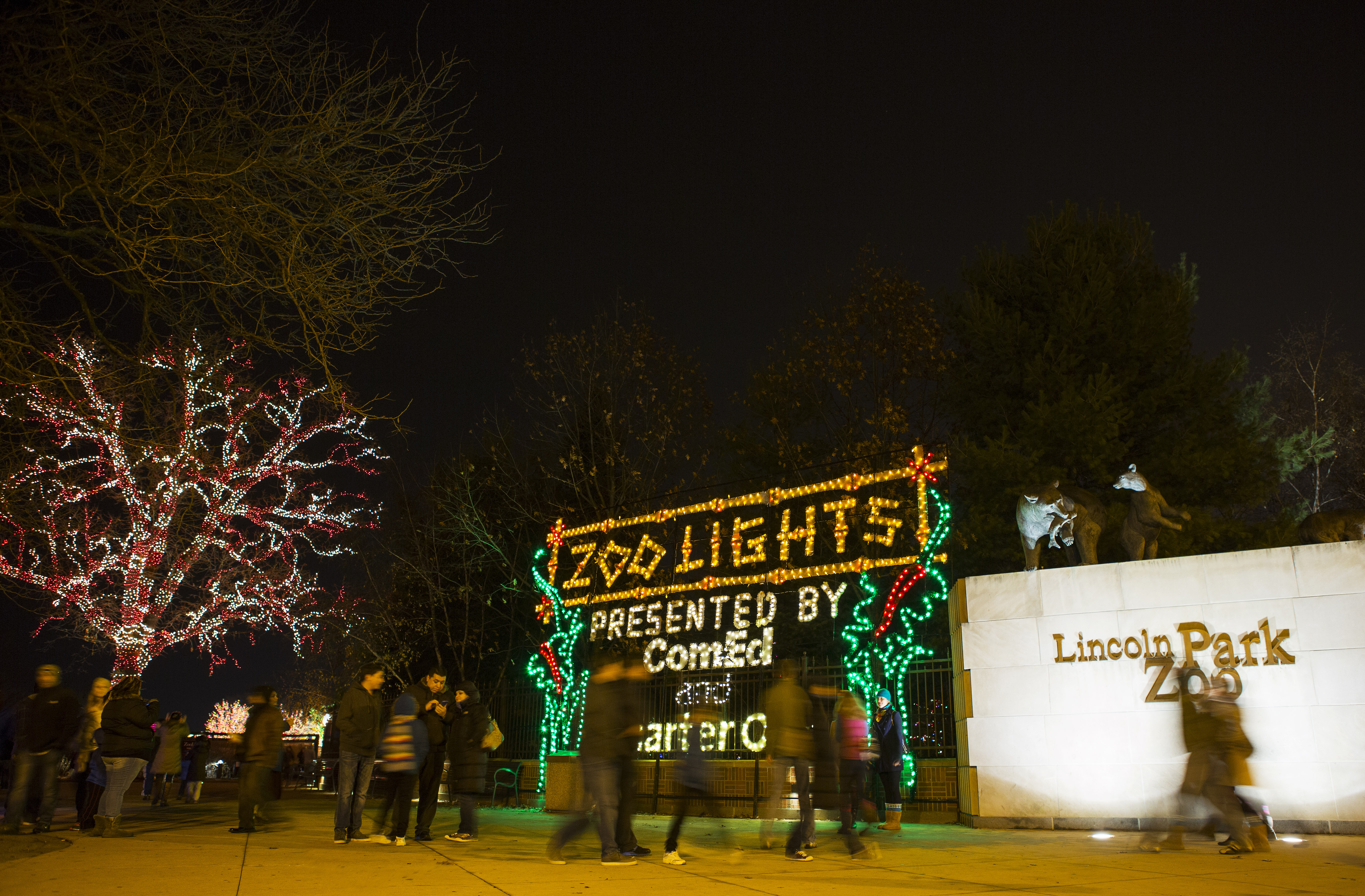Zoo Lights Chicago Hours